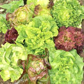Салат Всесезонный, смесь семян изображение 4