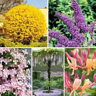 Суперпредложение! Комплект Цветущая изгородь из 5 саженцев изображение 3