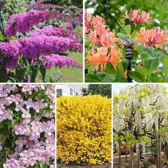 Суперпредложение! Комплект Цветущая изгородь из 5 саженцев изображение 5