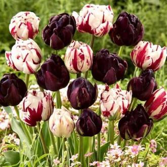 Суперпредложение! Комплект махровых тюльпанов Магия цвета изображение 4