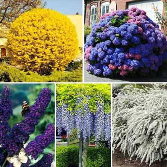 Суперпредложение! Комплект Многолетний сад из 5 саженцев изображение 4
