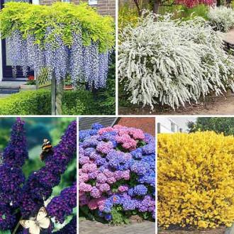 Суперпредложение! Комплект Многолетний сад из 5 саженцев изображение 8