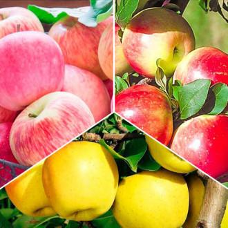 Суперпредложение! Комплект Яблочный сад из 3 саженцев: изображение 3