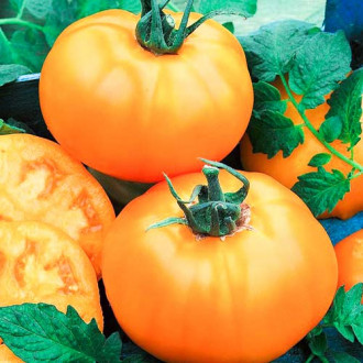 Томат Сахар оранжевый изображение 7
