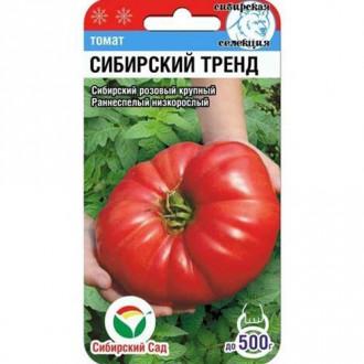Томат Сибирский тренд изображение 3