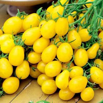 Томат Сладкая гроздь золотая изображение 6