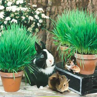 Трава для грызунов Хрум-хрум
