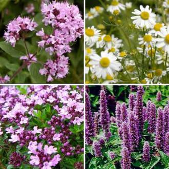 Травы для чая Ароматы лета, смесь семян изображение 1
