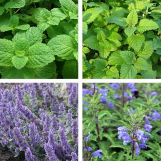 Травы для чая Бодрящее утро, смесь семян