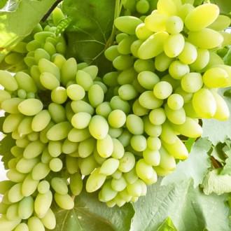 Виноград Тимур изображение 7