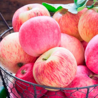 Яблоня Налив розовый изображение 5