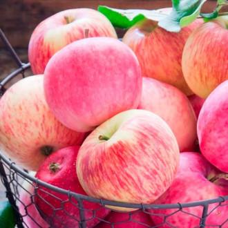 Яблоня Налив розовый изображение 3