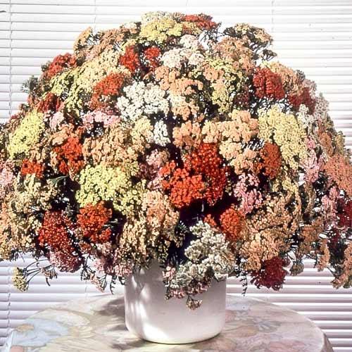 Тысячелистник Летние акварели, смесь окрасок изображение 1 артикул 69975