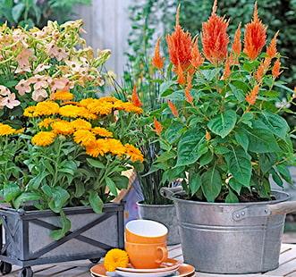 Многолетние цветы