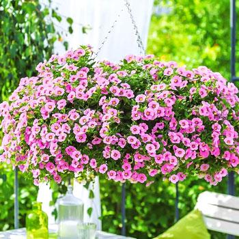 Семена ампельных цветов