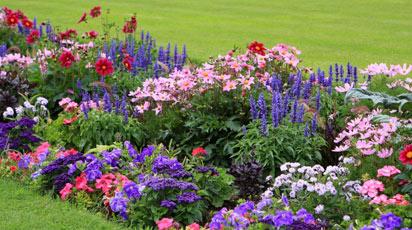 Семена домашних цветов: выбор и подготовка к посадке. Какие цветы легко вырастить дома из семян