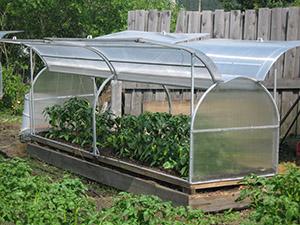 Выращивание клубники в теплице (голландская технология) • Форум фермеров и дачников