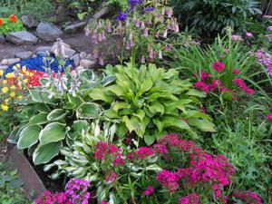 Люпины фото цветов на клумбе