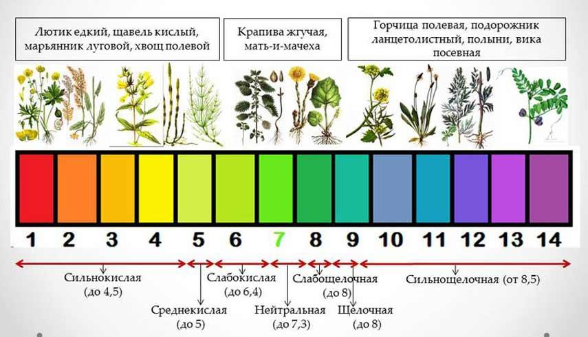 Индикаторы кислотности почвы