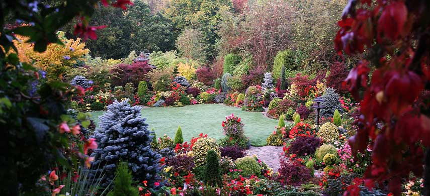 Совместимость деревьев в саду: правила доброго соседства