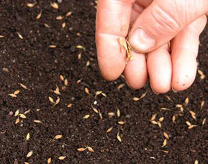 Какие семена цветов можно сажать в зиму 515